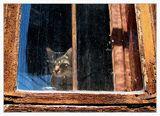 Пазителят на старата къща ; comments:38