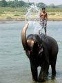 Още малко от слонското битие в Читуан ; Comments:20