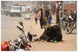 Непал - улици 2 ; comments:26