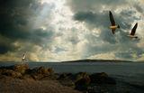 БО и Птиците ; comments:25