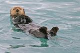 Nqkade v Alaska ; comments:104