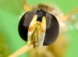 bugface 3 ; comments:20