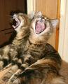 Гладни сме - рекла двуглавата ламя след сладкия сън ; comments:12