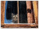 Пазителят на старата къща 2 ; comments:48