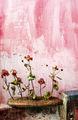 живот в розово ; comments:33