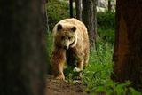 мечка ; comments:5