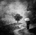 в дъжда ; comments:49