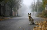 Есенни кучета ; comments:60
