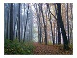 Есен и мъгла ; comments:77