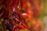 ярко есенно II ; comments:42