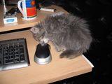 Котка и мишка :) ; comments:9