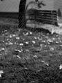 есенно преплитане.. ; comments:52