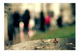 Маглавие ; comments:28