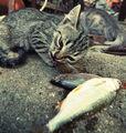 fishkas ; comments:43