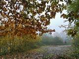 Есенна мъгла ; comments:71