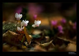 Сълзите на гората ; comments:128