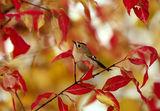 есенни багри ; comments:113
