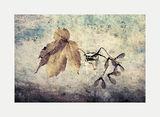 усещане за есен ; comments:29