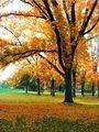 autumn2 ; comments:5