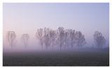 Романтично утро... ; comments:65