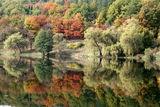 Есенна шарения 2008-4 ; comments:26