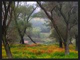 Есенни импресии ; comments:44