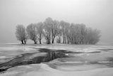 зимни върби ; comments:93