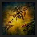 Влюбваш ме ... в есента ; comments:62