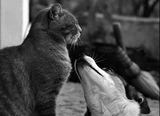 Хайде, дай една целувчица.... ; comments:57