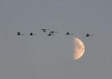 полет в нощта ; comments:38