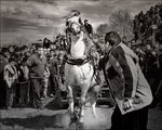 Уморените коне ги убиват -нали? /4/ ; comments:43