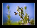 no name ( ID=993327 ) ; comments:13