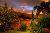 Залез в градината ; comments:65