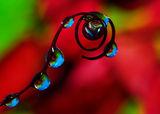 Когато розите плачат ; comments:56