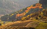Късна есен,нейде отдалеч долитат окапали листа ; comments:30