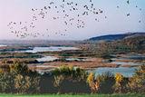 Птиците отлитат на юг ; comments:86