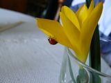 no name ( ID=985155 ) ; comments:7