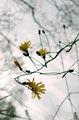 ноемврийски цветя ; comments:17