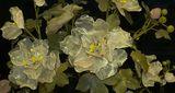 / каменни цветя / ; Comments:8
