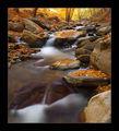 есен в Родопи ; comments:29