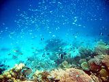 няколко рибки ; comments:48