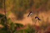 Спомен за есента ; comments:45