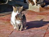 Котешки неволи ; comments:11