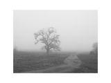 Пак мъгла... ; comments:80