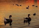 Привечер на Дунав ; comments:76