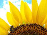 Пчеличката Мая ; comments:16
