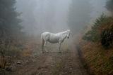 Среща в мъглата ; comments:55