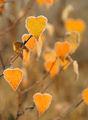 Есенна любов! ; comments:46