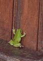 Моля ви, отворете ми да вляза... ; comments:8