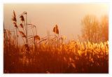 Слънчев Зимен Следобед ; Comments:25